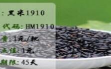 有机黑米1910